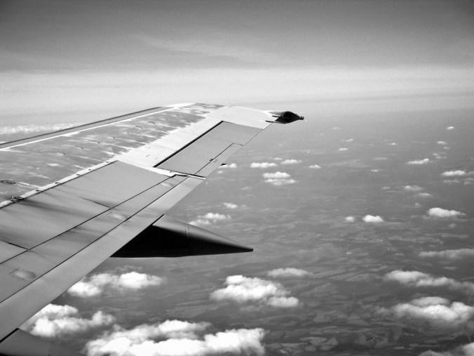 wing-238469_1280