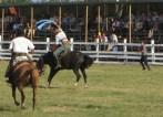 Broncho Riding