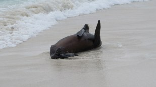 I like rolling in the sand - don't you?