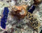3 clams