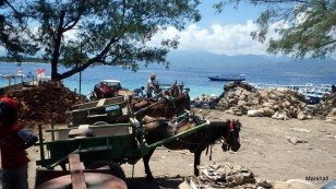 Horse carts awaiting loads of building materials. Gili Trawangan