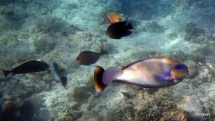Diversity of fish, Bloo Bai, Bali