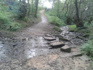 Stepping stones over the stream.