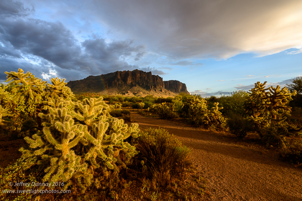 The sun illuminated the Cholla Cactus on the left, ignoring the mountain for a bit.