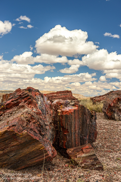 Colorful Petrified Trees