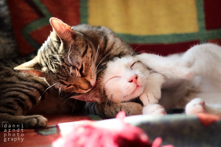 Cats Grooming