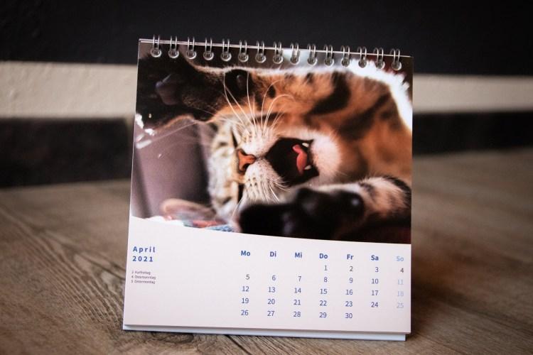 Beispielmonat mit Katzenfoto (gähnende Katze) aus dem Katzenkalender