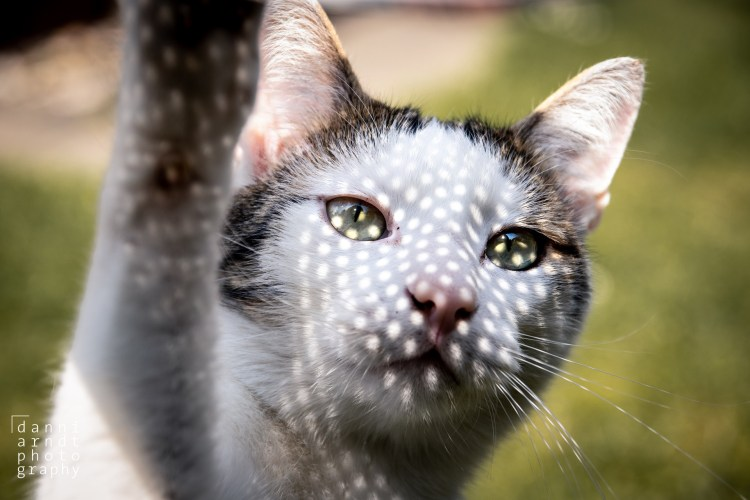Cat with Sparkles