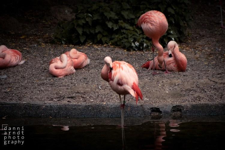 Pink Flamingo - Tierprints / Animal Prints