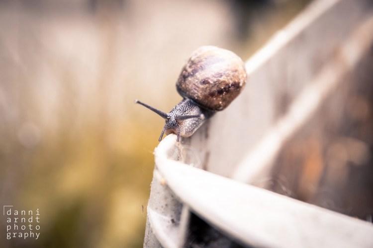 Schnecke, snail, Tierfotos