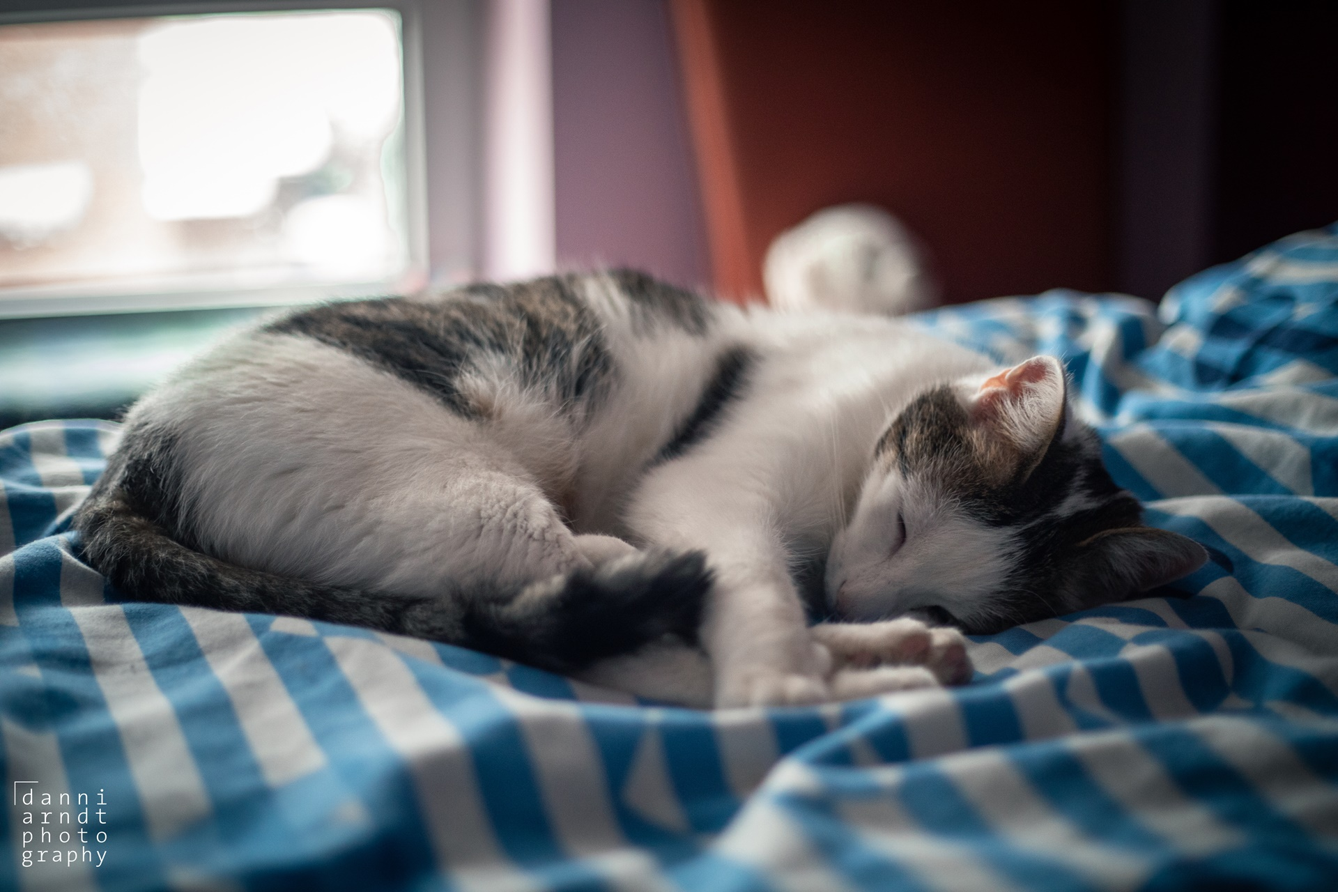 Sleepy Cat on the bed