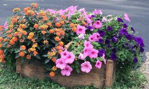 flowersklondike