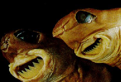 Cookie Cutter Shark Bite