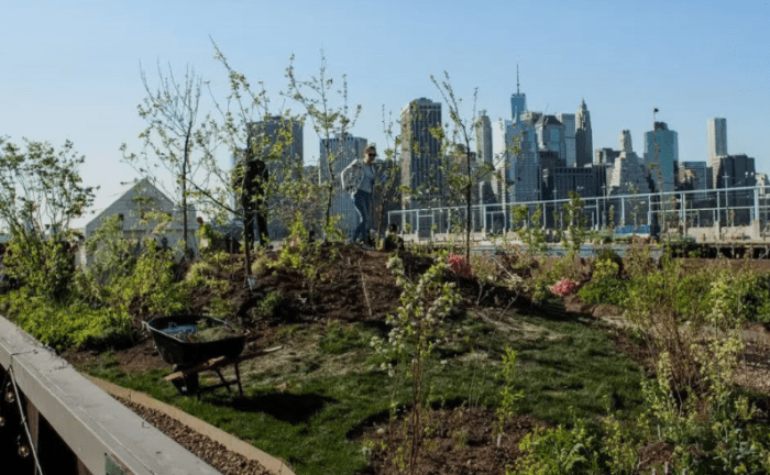 Swale – a floating food forest