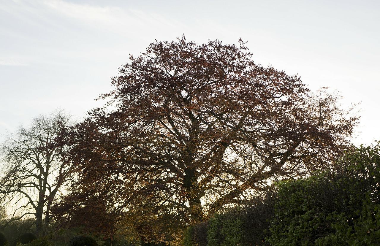 Cambridgeshire autumn trees