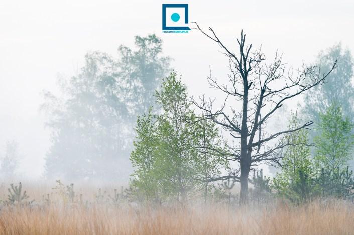 Silhouet van boom tegen de mist.