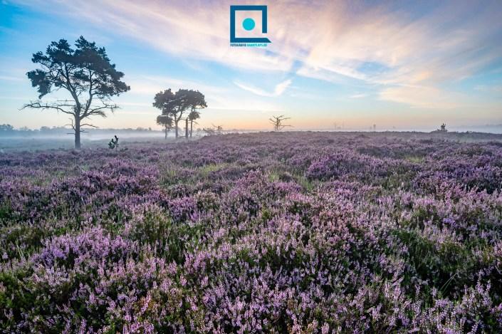 Kalmthoutse Heide - Heidelandschappen