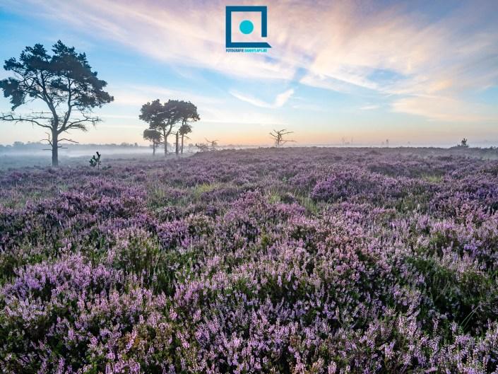Kalmthoutse Heide 2020