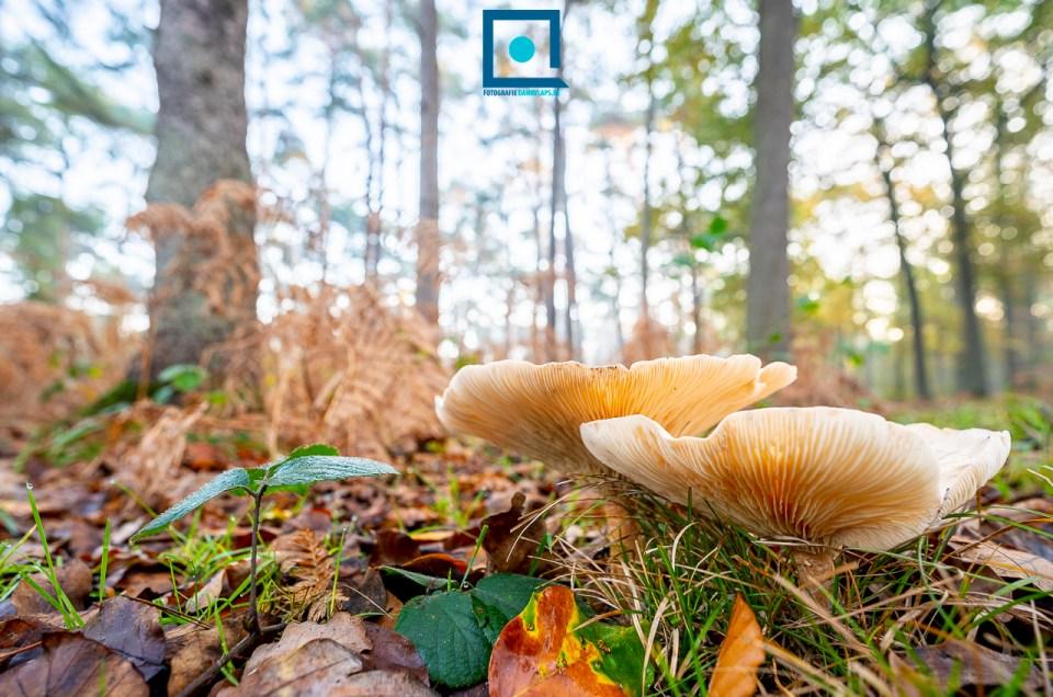 Herfst in het Peerdsbos zonder Amerikaanse tint
