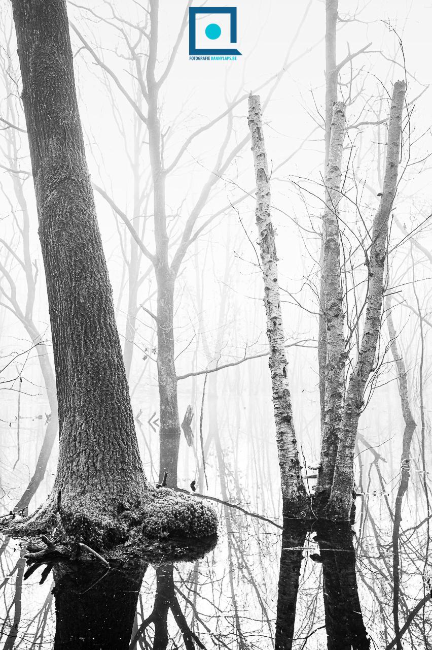 Nat bos met eik en berk tijdens de lente