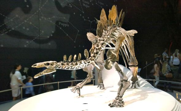 My Sunday Photo - National History Museum dinosaur