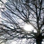 Sunshine through the trees – square