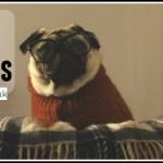 Vision Direct: A Pug's Christmas