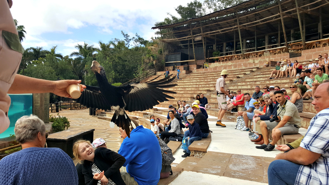 Exotic bird show at Jungle Park Zoo in Tenerife