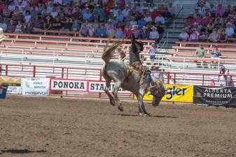 Panoka Rodeo 704