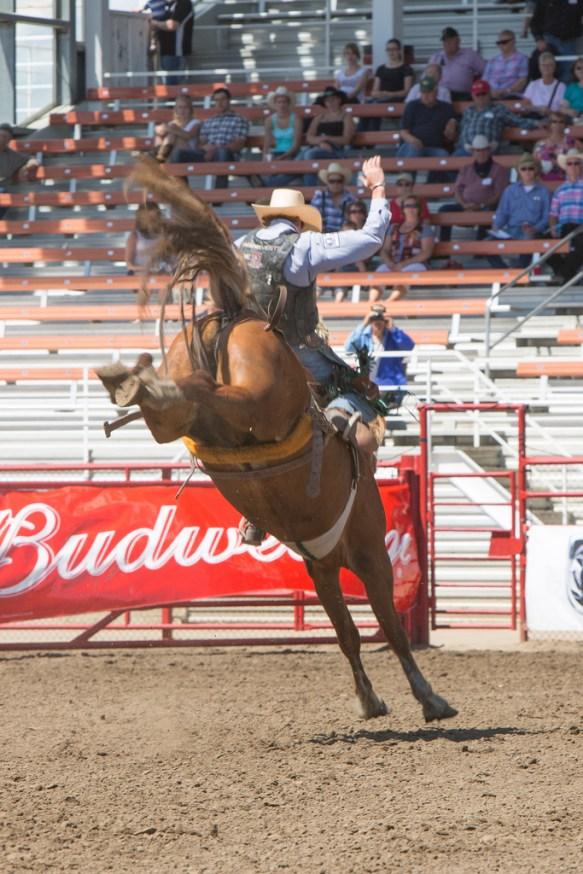 Panoka Rodeo 754