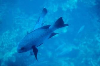 great_barrier_reef-1