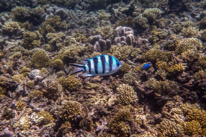great_barrier_reef-35