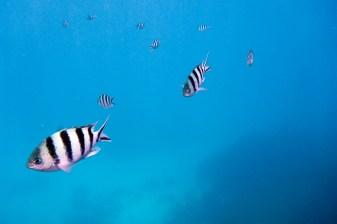 great_barrier_reef-62
