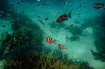 great_barrier_reef_agincourt_reef-15