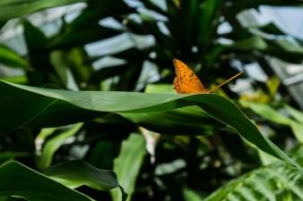 kuranda_birds_butterflies-13