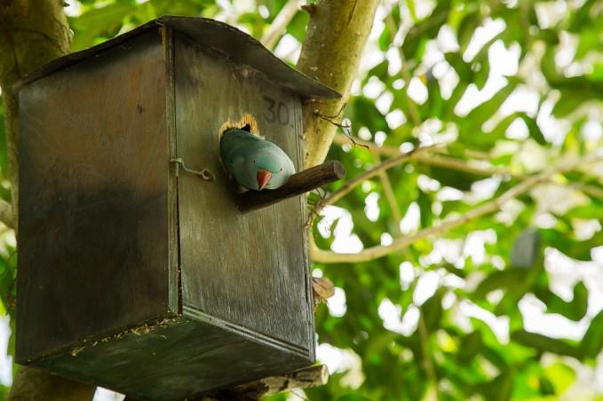 kuranda_birds_butterflies-18