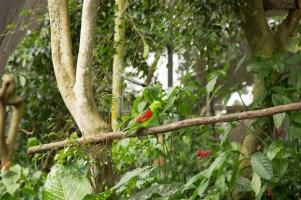 kuranda_birds_butterflies-19