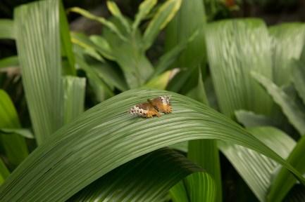 kuranda_birds_butterflies-3