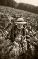 female-tobacco-worker