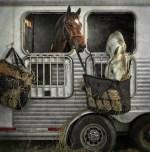 thanksgiving-fox-hunt_01