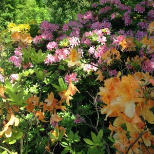 bloemen clingendael den haag