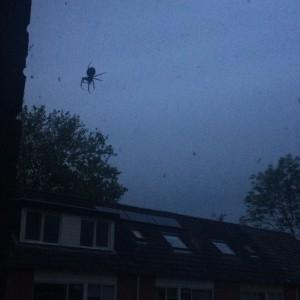 spin voor raam