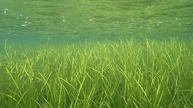 Gershøj Fritidsfiskerforening og DTU Aqua undersøger fiskebestande i ålegræs dag og nat