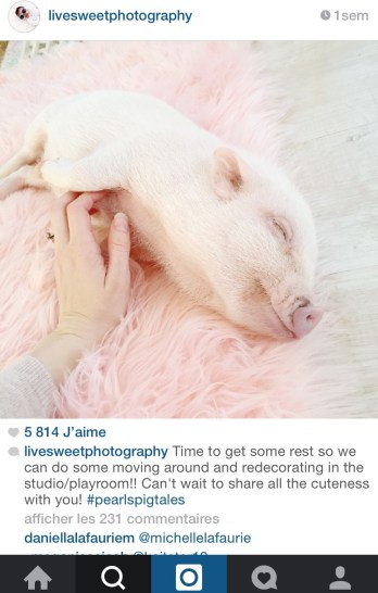 coup de coeur Instagram Livesweetphotography