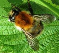comment se d barrasser des gu pes et abeilles la maison dans notre maison. Black Bedroom Furniture Sets. Home Design Ideas
