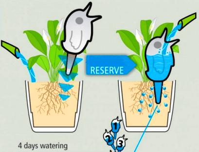 Pendant Votre Absence Arroser Vos Plantes Goutte A Goutte Dans