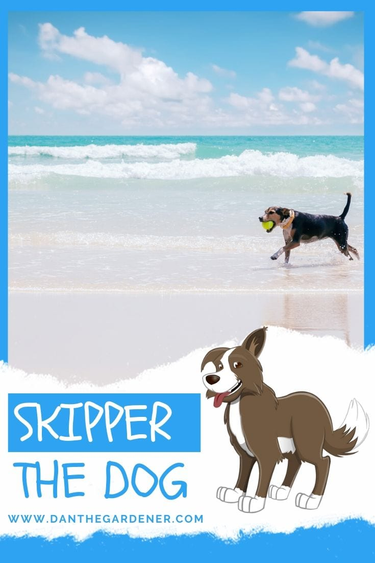 Skipper the Dog