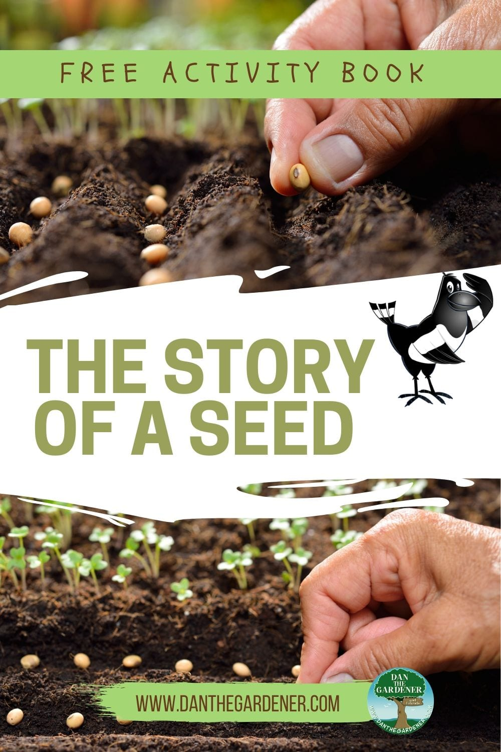 The Story Of A Seed