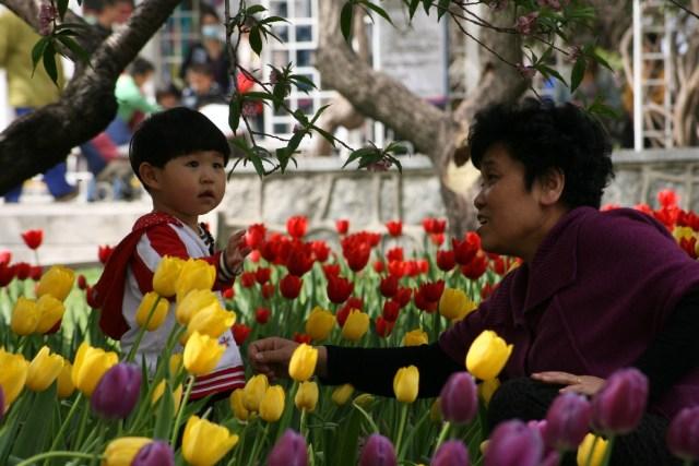 Lalele in Zhongshan 11
