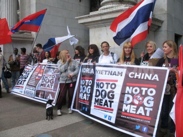 Festivalul cărnii de câine declarat ilegal în China - Foto demotix.com